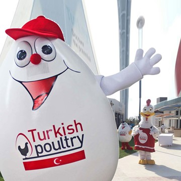 CHICK AND EGG - TURKISH POULTRY 4