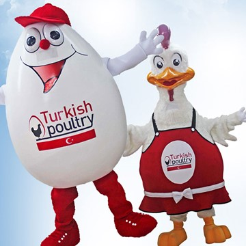 CHICK AND EGG - TURKISH POULTRY 7